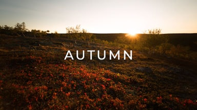 stock footage category finland autumn